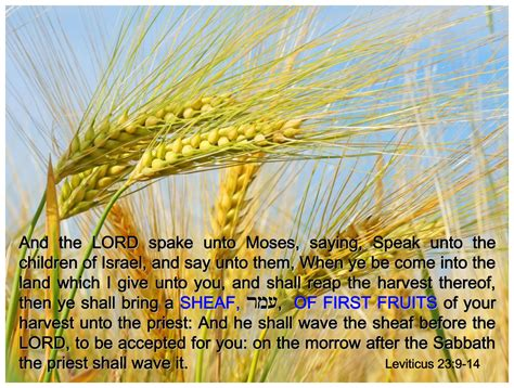 fruit in the bible fruits feasts of the lord