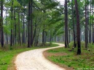 Forest Tx 5 Beautiful National Forests And Preserves In
