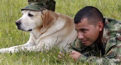 army dogs image gallery dogs