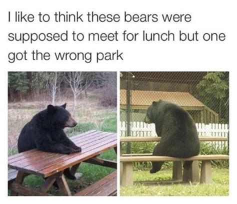 Bear At Picnic Table Meme - humorize your day with 35 random funny pics team jimmy joe
