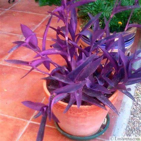 purple outdoor plants bing images