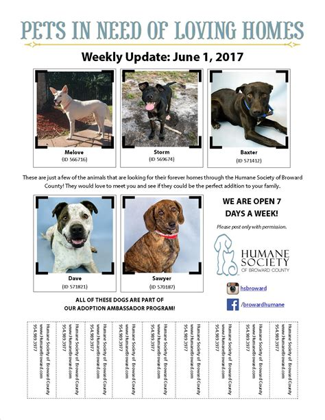 dog adoption flyer template weekly pet flyer june 1 2017 humane society of broward