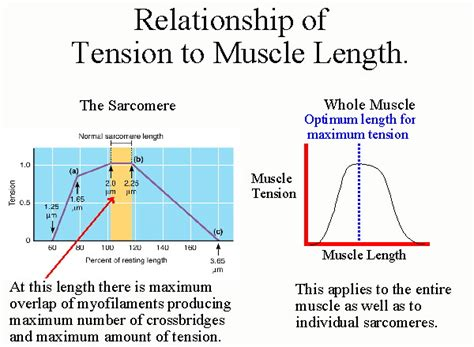 Ways To Increase Sexual Tension Between You And Your Crush by Biol 237 Class Notes And Metabolism