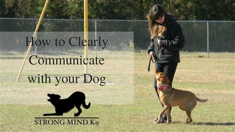 how to communicate with dogs strong mind k9 llc to strengthen the mind bond between human