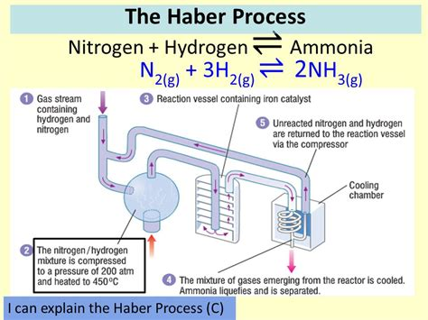 haber bosch process diagram diagram of the haber process 28 images the h 228 ber