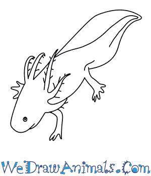 Axolotl Coloring Page by Axolotl Coloring Axolotl Coloring