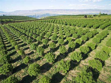 cultivo interior cultivo de marihuana exterior cultivo de marihuana interior