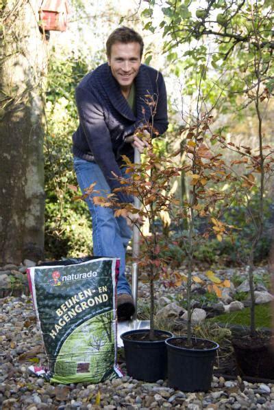 beukenblad goed in de tuin goede startgrond voor hagen stevig beuken in de tuin
