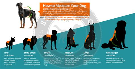 how to your to be a service animal alpha service harness vest service certifications