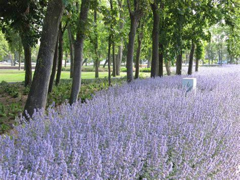 Landscape Architect Salary In South Africa Leopoldpark Nieuwpoort Belgium Alain Cappelle