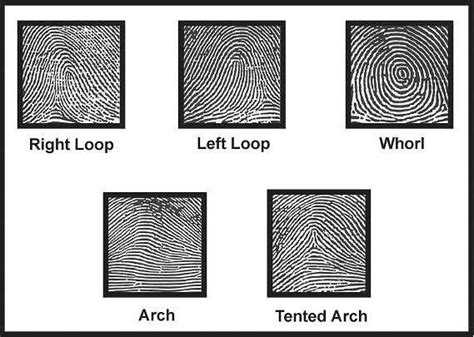 pattern types of fingerprints how are images of fingerprints indexed in databases quora
