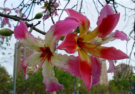 imagenes flores extraordinarias cuatro fotos de flores hermosas para fondo de pantalla