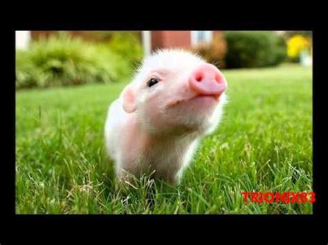 imagenes animales bonitas imagenes bonitas y tiernas los animales mas hermosos del