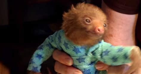 cute baby sloth   onesie
