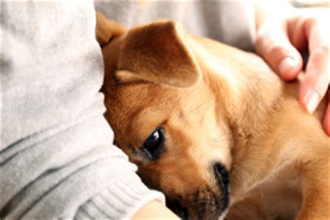 why do dogs like to be pet with deformity gets tale adoption after he s the last one to be adopted at