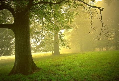 imagenes lindas verdes banco de im 193 genes 24 fotograf 237 as de paisajes naturales