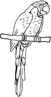 pirate parrot coloring page pirate parrot coloring page