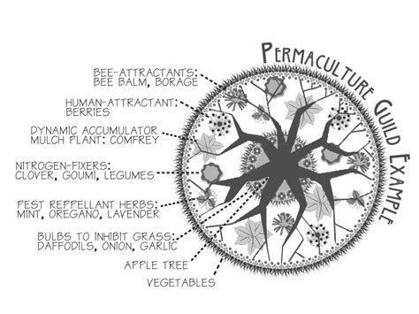 permaculture guilds fruit trees looking for links to solid guild designs such as three