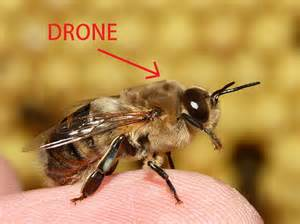 Stop calling them drones they re just rc helicopters with a camera