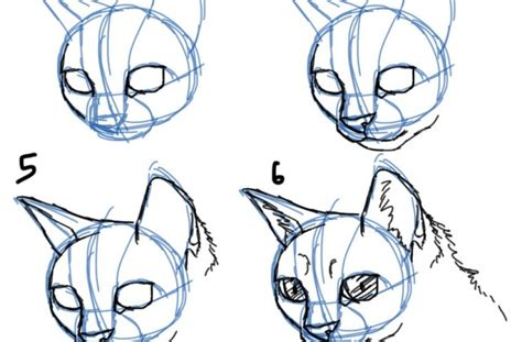 Drawing 3 4 Faces by How To Draw A Cat 3 4 View Litle Pups