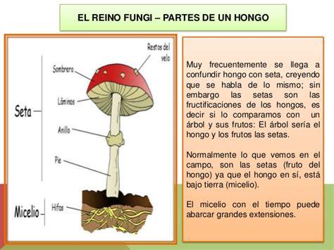 imagenes hongos ingles el reino fungi hongos