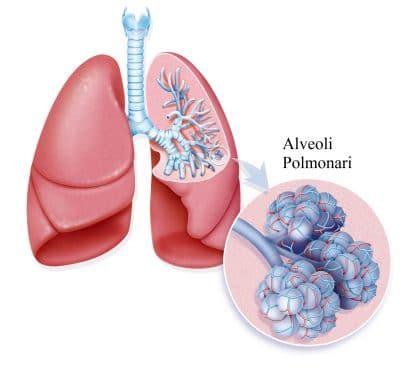 vasi polmonari vene arterie e capillari