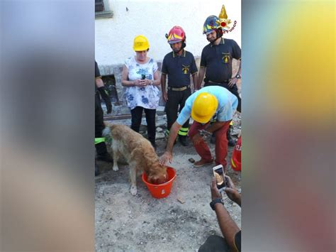 puppies rescued in italy rescued after spending 9 days trapped rubble left by italy earthquake abc news