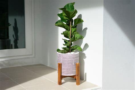 choose   indoor plants   home
