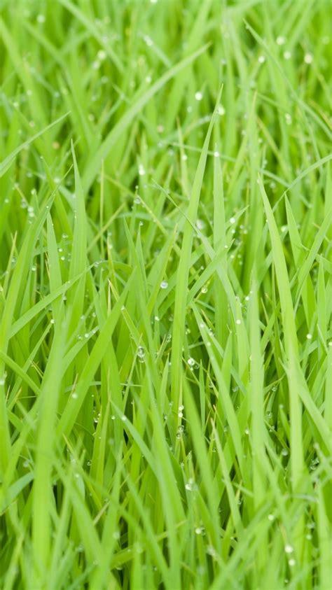green wallpaper hd for mobile green grass hd wallpaper