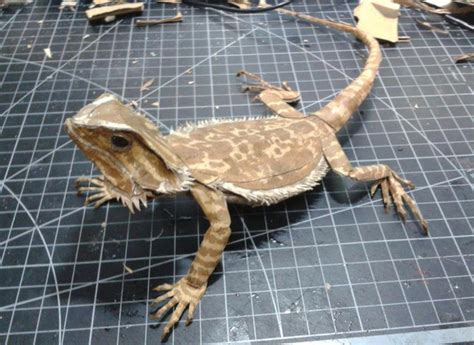 lizard made out of cardboard iron suit by the taiwanese tony stark 鍾凱翔