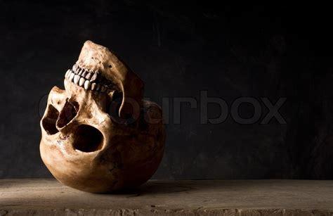 life photography upside  human skull leave