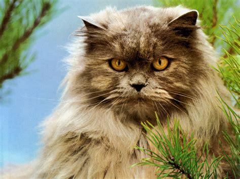 imagenes increibles de gatos todo sobre los gatos