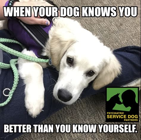 Ptsd Dog Meme - submissions psychiatric service dog partners