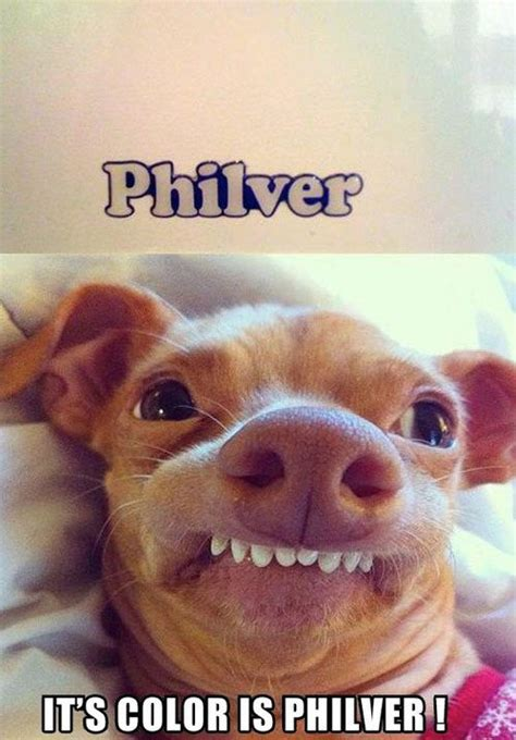 Funny Dog Face Meme - cool animals pets 31 michael bradley time traveler