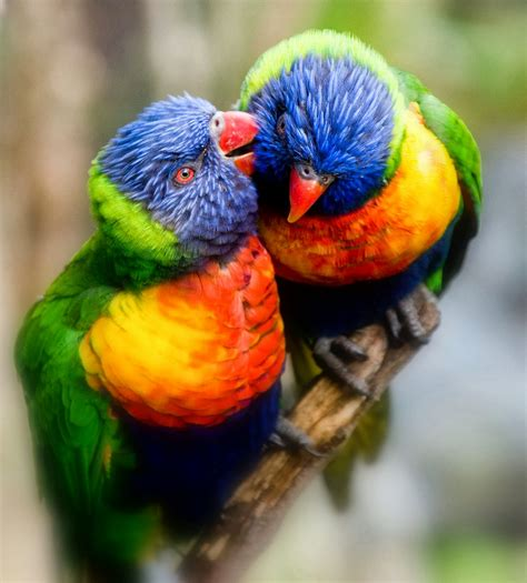 colorful birds beautiful and lovely birds images allfreshwallpaper