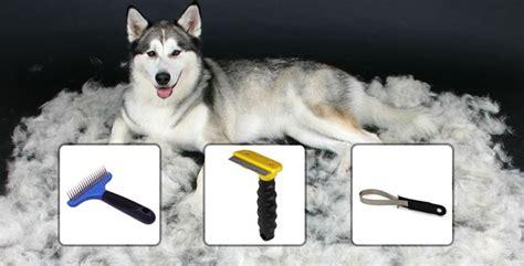 Husky Shedding Tips by 5 Steps How To Groom A Siberian Husky Inside Dogs World