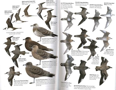 bird identification chart pictures to pin on pinterest