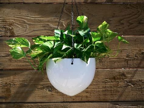 white hanging planter white hanging ceramic bullet planters decorate pinterest