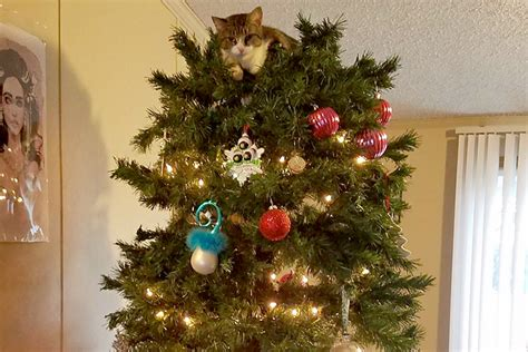 cat first seen christmas tree cats in trees meet 14 of the most festive jerks unleashed