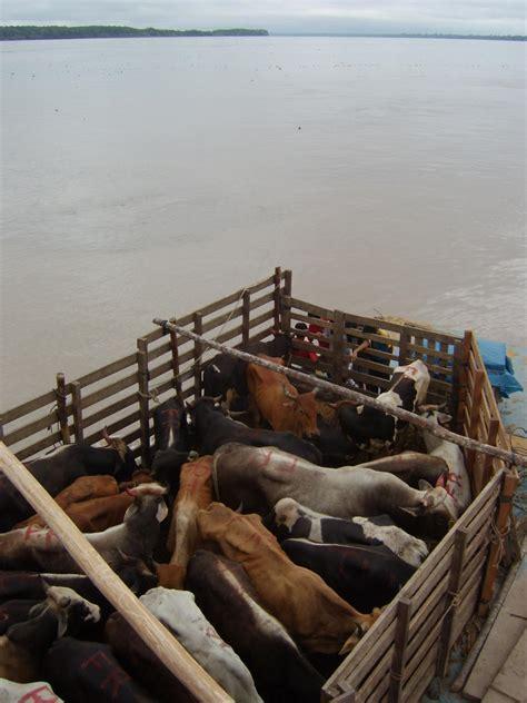 fast boat yurimaguas to iquitos peru reisebericht quot schifffahrt yurimaguas iquitos quot