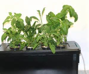 Hydroponic Indoor Herb Garden Home Made Windowsill Hydroponic Herb Garden All