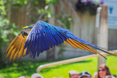 macaw named winston is 2nd from zoo bird show to fly away