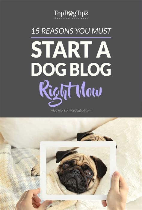 when should you start a puppy 15 reasons you should start a right now