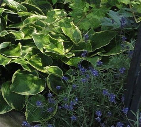 pflanzen f r schattige pl tze im garten pflanzen f 252 r schattige pl 228 tze im garten pflanzen f r