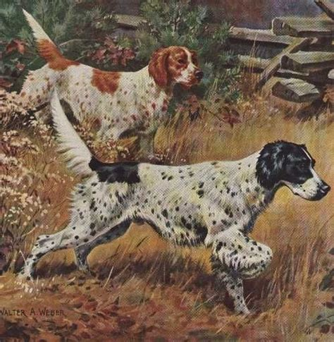 english setter girl dog names click visit site and check out best quot english setter quot t