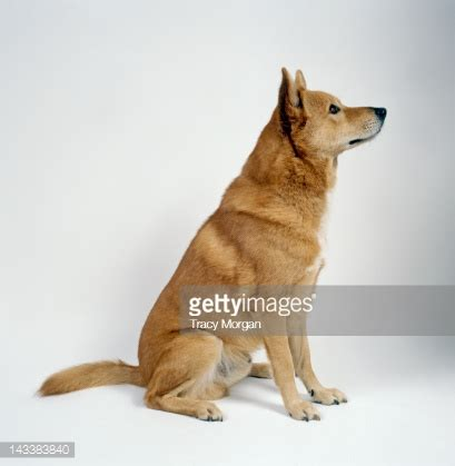 puppy sitting sitting stock photos and pictures getty images