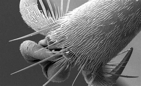 scanning electron microscopy central microscopy research facility