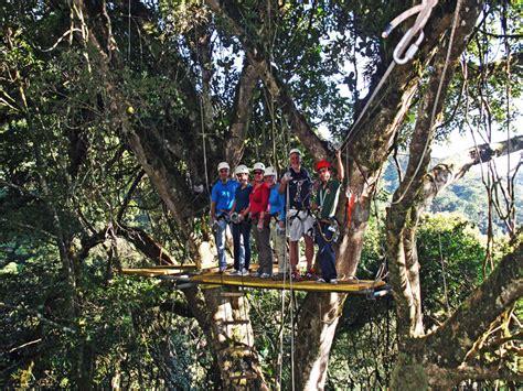 canopy amazon canopy amazon amazon nature tours paragon original canopy tour canopy tours monteverde