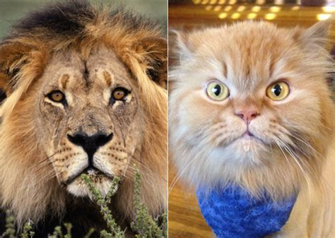 dogs that look like cats 12 cats and dogs who look like other animals photo gallery