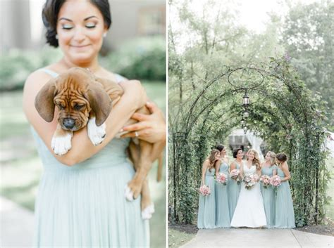 puppy wedding chooses rescue puppies bouquets for best wedding photos rover